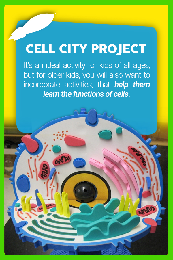 Cell City Project
